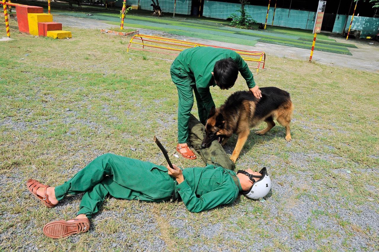 Dịch vụ huấn luyện chó cảnh uy tín, chuyên nghiệp nhất
